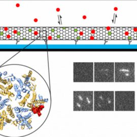 PAPER: Fluorescence biosensor for real-time interaction dynamics of host proteins with HIV-1 capsid tubes
