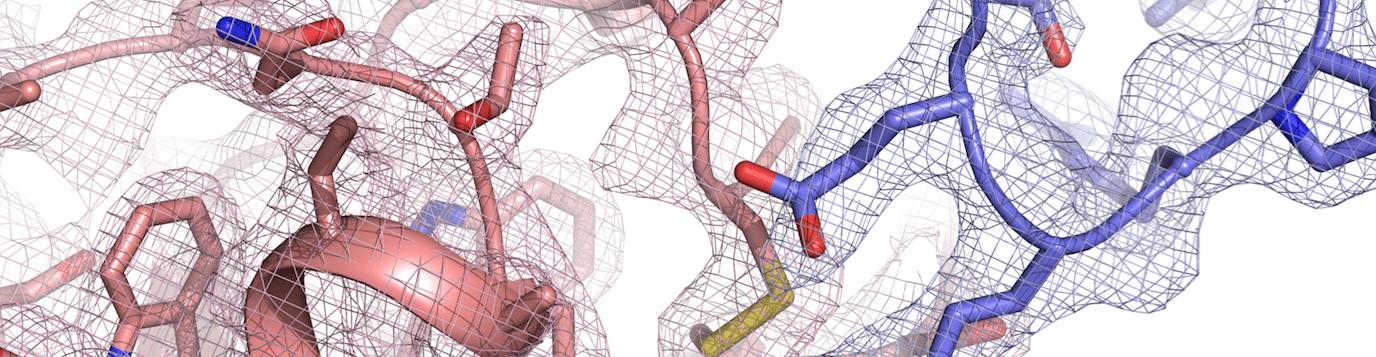 Virus vs Host — an evolutionary arms race