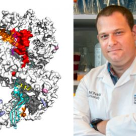 Scientists reveal key mechanisms of vital enzyme complex