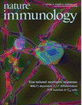 Skin DCs cluster for efficient T cell activation.