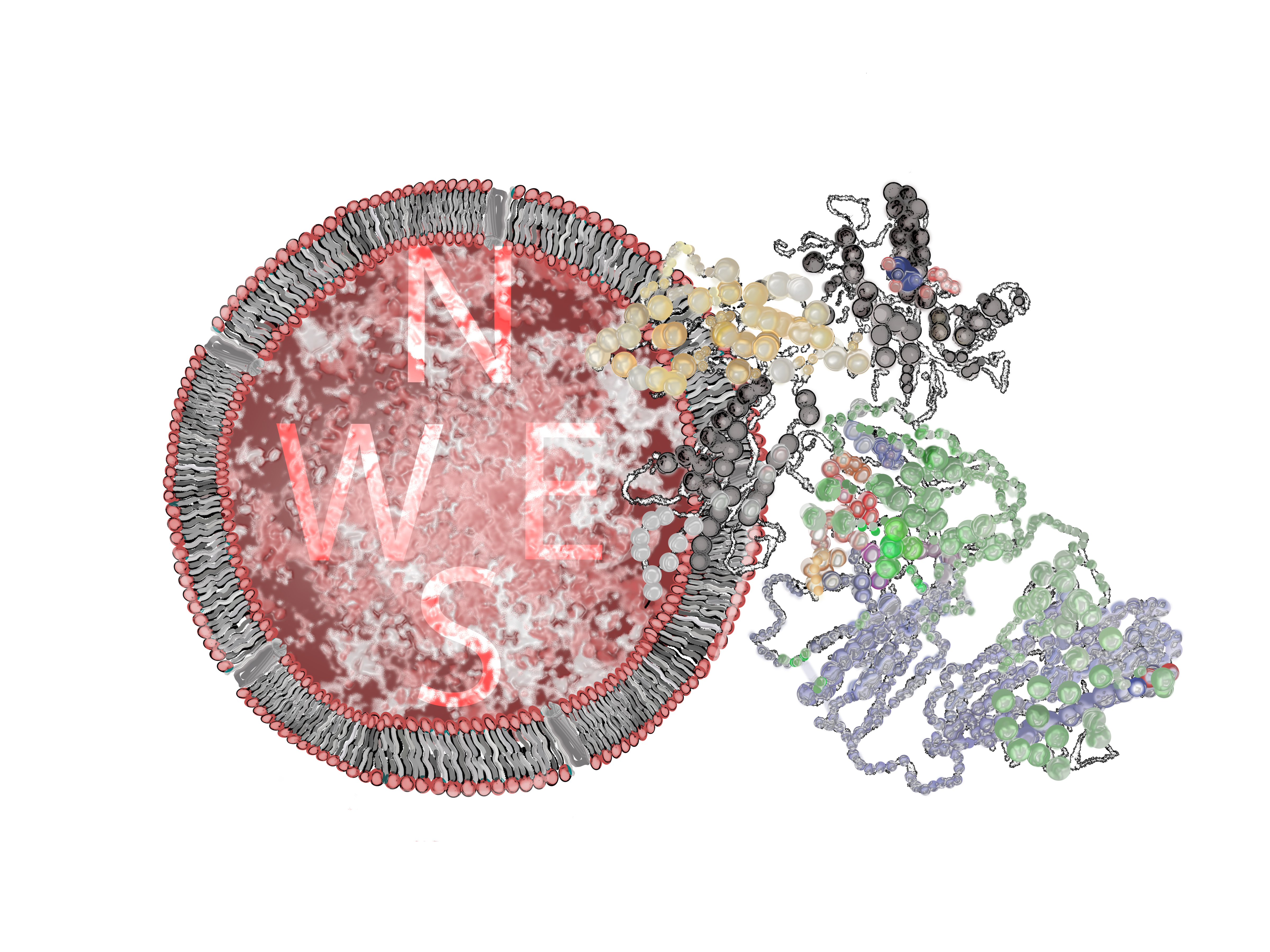 A class of γδ T cell receptors recognize the underside of the antigen-presenting molecule MR1