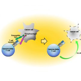Butyrophilin 2A1 is essential for phosphoantigen reactivity by γδ T cells