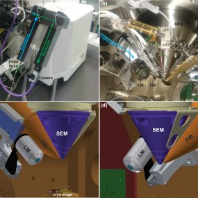 PIE-scope, integrated cryo-correlative light and FIB/SEM microscopy