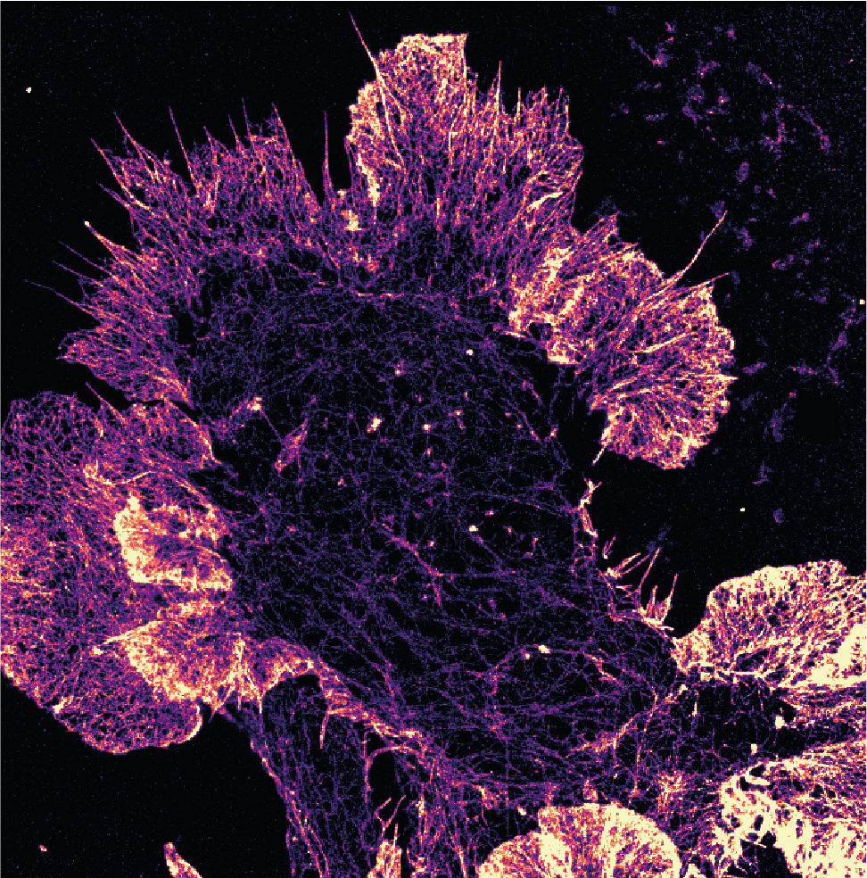 SUPERCHARGE YOUR MICROSCOPE: RESEARCHERS SHARE GUIDE FOR ULTRA-PRECISE 3D IMAGING